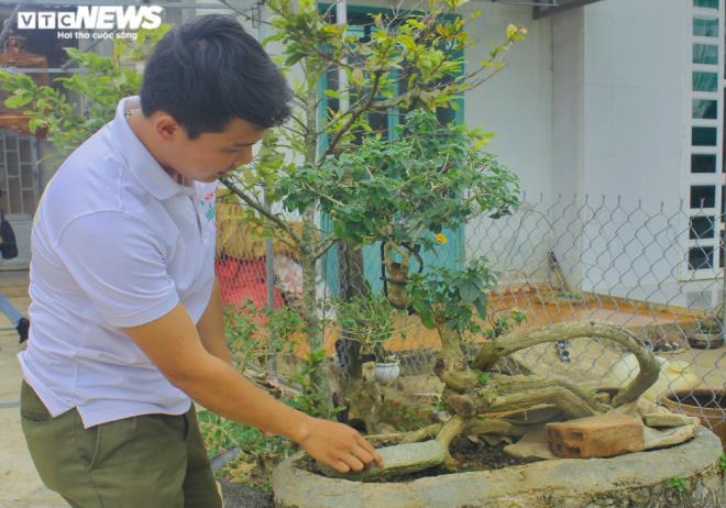 Gia Lai: Đem loài hoa dại ven đường về hóa trang thành cây cảnh chưng Tết, nông dân đút túi tiền triệu - Ảnh 7.