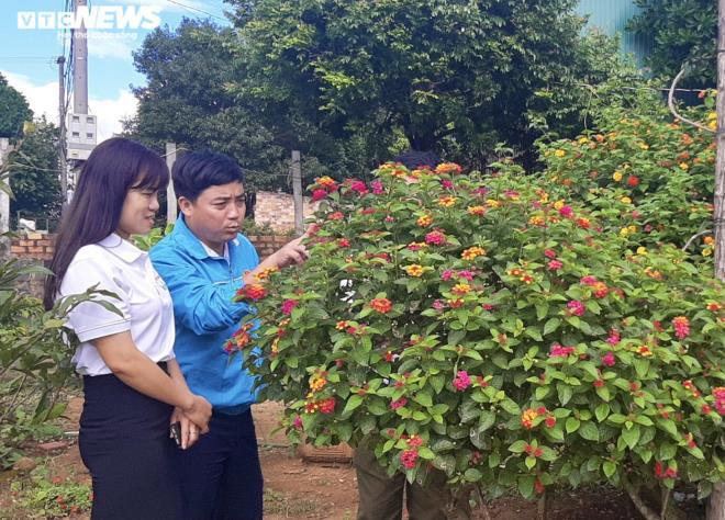 Gia Lai: Đem loài hoa dại ven đường về hóa trang thành cây cảnh chưng Tết, nông dân đút túi tiền triệu - Ảnh 11.