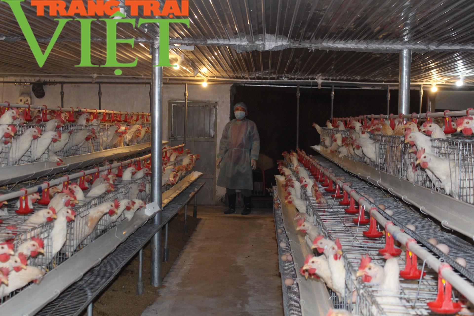 Cả làng khốn đốn vì nuôi gà, vịt, mà mình hộ ông Phúc nuôi gà kiểu này vẫn có lãi đều đều - Ảnh 1.