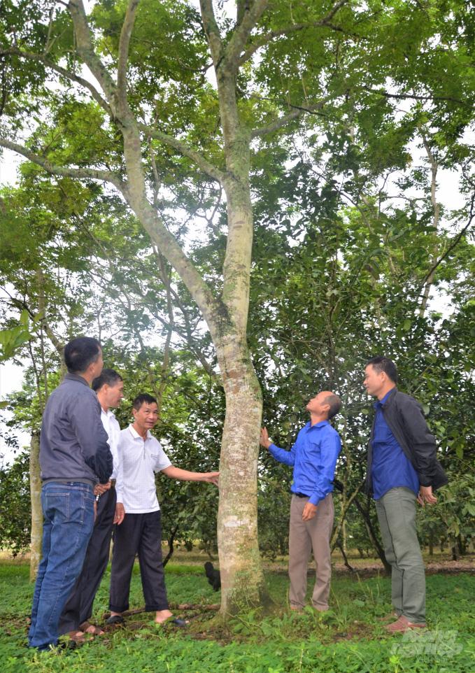 Tuyên Quang: Bất ngờ thành tỷ phú, giàu nhất vùng nhờ khổ công trồng 5.000 cây sưa 20 năm trước - Ảnh 1.