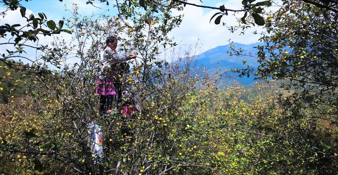 Sơn La: Phát triển cây ăn quả trên đất dốc, hướng đi tốt nhất để huyện vùng cao thoát nghèo - Ảnh 2.
