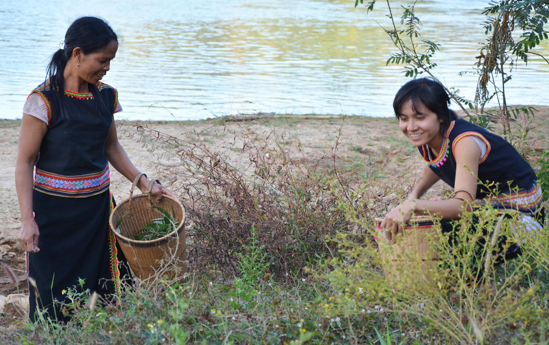 Những thứ rau rừng đặc sản tên độc lạ ở tỉnh Kon Tum , nếm thử một lần nhớ cả đời - Ảnh 2.