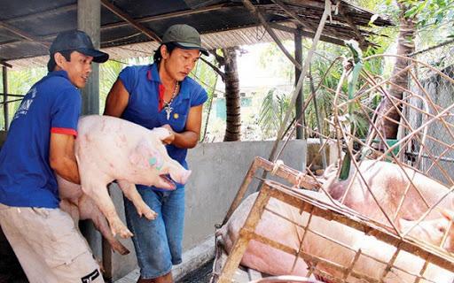Giá nông sản hôm nay (14/1): Gạo khẳng định giá trị cao trên thị trường quốc tế, lợn hơi vẫn tăng từng ngày - Ảnh 1.