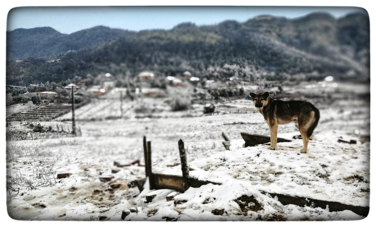 Lào Cai: Lạnh -3 độ C, Y Tý ngày tuyết rơi như chiếc tủ lạnh khổng lồ, đẹp như trời Âu - Ảnh 4.