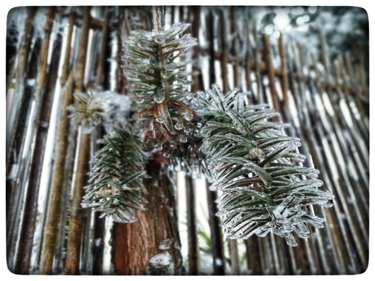 Lào Cai: Lạnh -3 độ C, Y Tý ngày tuyết rơi như chiếc tủ lạnh khổng lồ, đẹp như trời Âu - Ảnh 5.