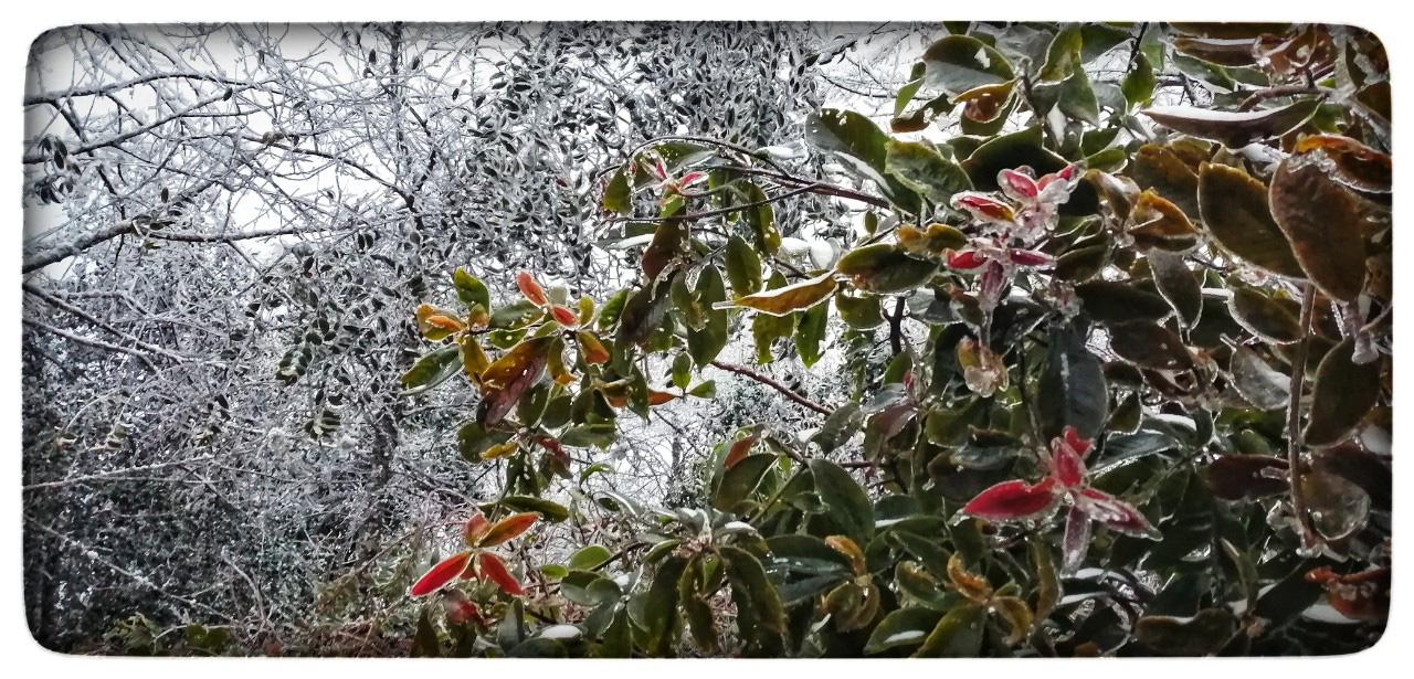 Lào Cai: Lạnh -3 độ C, Y Tý ngày tuyết rơi như chiếc tủ lạnh khổng lồ, đẹp như trời Âu - Ảnh 6.