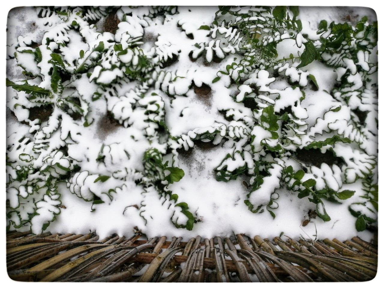 Lào Cai: Lạnh -3 độ C, Y Tý ngày tuyết rơi như chiếc tủ lạnh khổng lồ, đẹp như trời Âu - Ảnh 16.