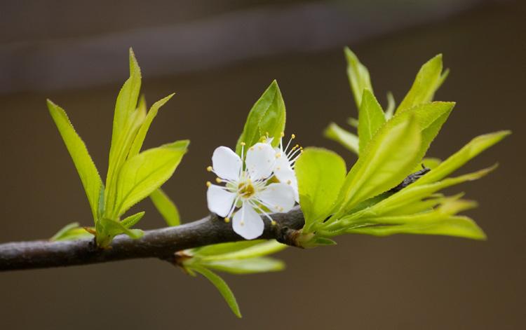Mùa xuân sang, trong nhà có 4 dấu hiệu này dự báo tin vui gõ cửa, phú quý đến nhà - Ảnh 1.