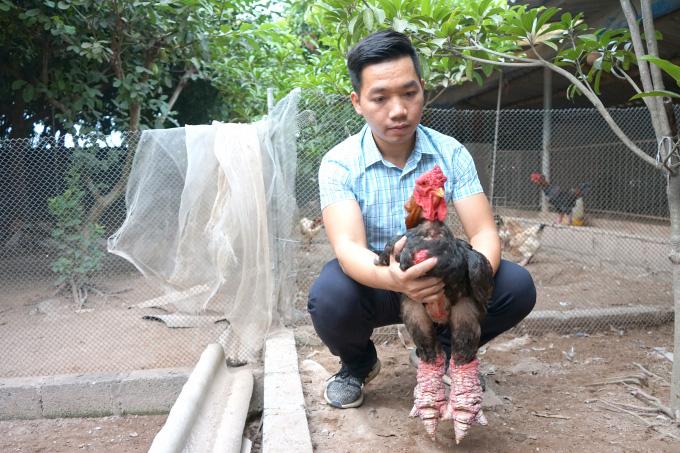 Đi sau vẫn thành công nhờ áp dụng 4.0 vào nuôi gà Đông Tảo - Ảnh 1.