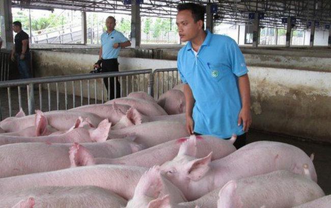 Giá nông sản hôm nay (15/1): Lợn hơi lên mức cao nhất 86.000 đồng/kg, lúa gạo ổn định - Ảnh 1.