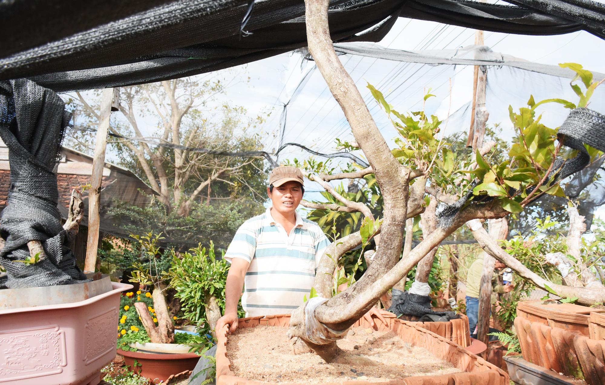 Đáng ngại: Đào 1 cây mai rừng khủng bán 45 triệu, nhoáng cái đã có người mua lại giá 85 triệu - Ảnh 2.