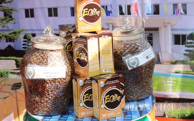 Sản phẩm cà phê của Viện Khoa học kỹ thuật nông lâm nghiệp Tây Nguyên