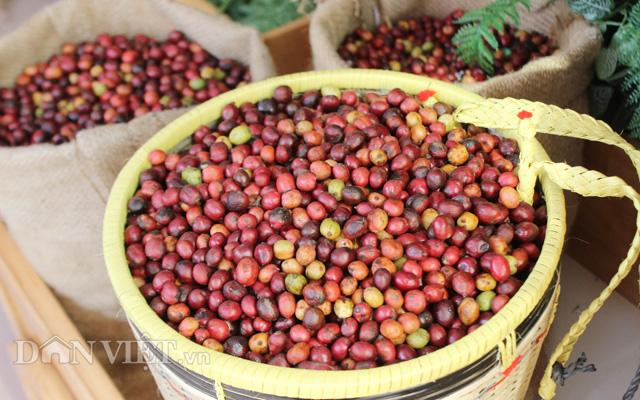 Ngày cà phê lần 4 là dịp tôn vinh người trồng, chế biến và kinh doanh cà phê