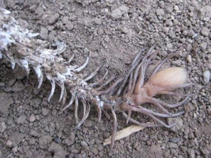 Loài rắn lạ có đuôi như nhện được ví như... lưỡi hái thần chết - Ảnh 7.