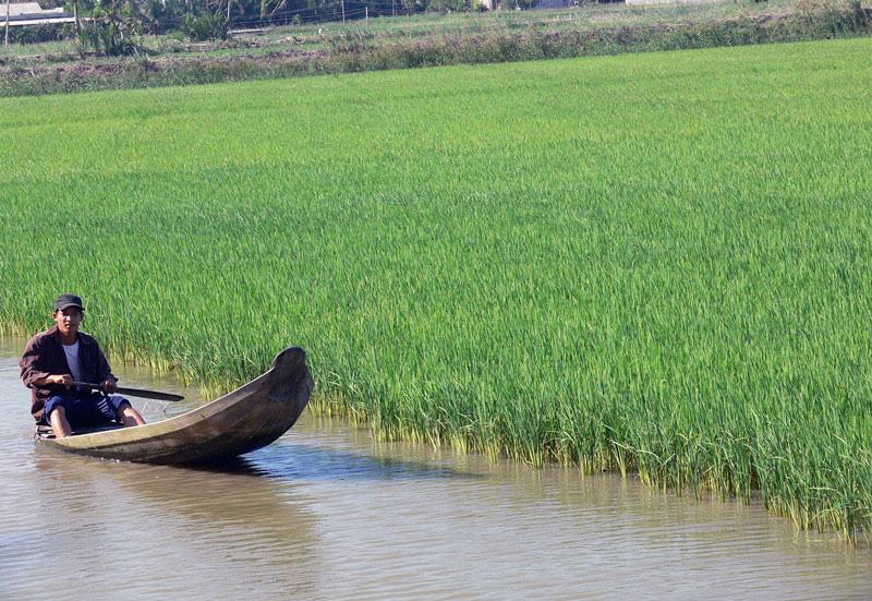 Bến Tre: Thả tôm càng xanh vô ruộng lúa, cuối vụ nông dân nhận điều bất ngờ này - Ảnh 1.