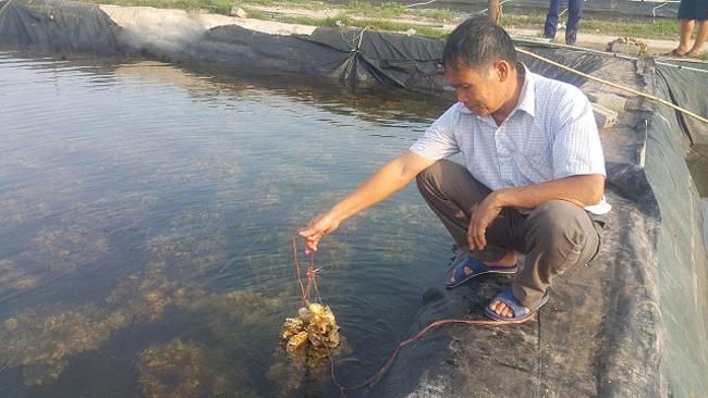 """Có tem """"thông hành"""", nông dân miền biển Cố đô tự tin làm ra nhiều con giống """"ông ăn bà khen"""" nhất Việt Nam - Ảnh 1."""
