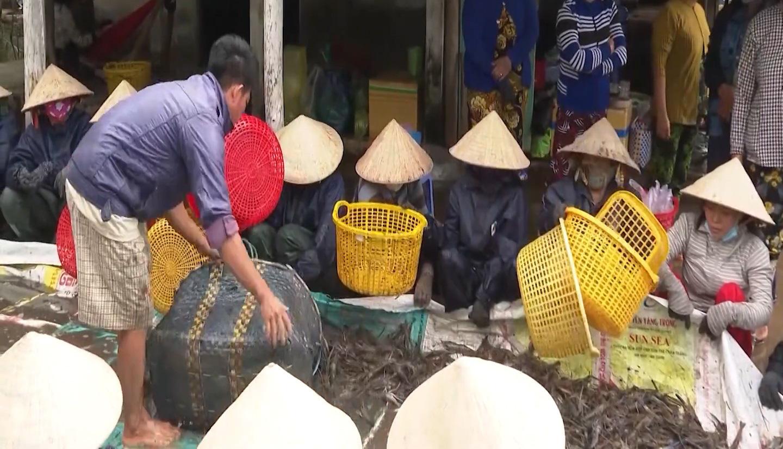 Bạc Liêu: Nông dân rộn ràng vụ mùa thu hoạch tôm càng xanh - Ảnh 4.
