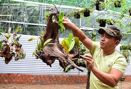 Đam mê lan rừng khi mới 15 tuổi, nay chàng nông dân trẻ này có tiền tỷ trong tay - Ảnh 4.