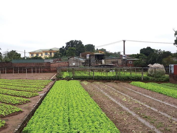 Giá đất nông nghiệp vùng ven Hà Nội tăng chục lần - Ảnh 3.