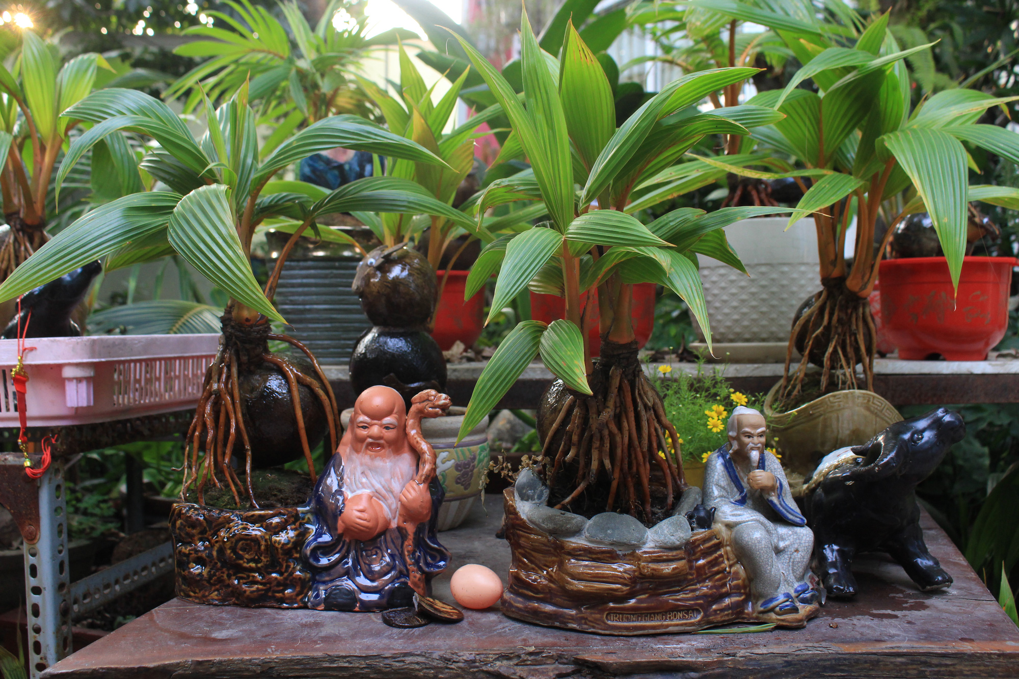 Độc đáo dừa khô bonsai hình trâu chơi Tết tiền triệu ở Sài Gòn - Ảnh 13.