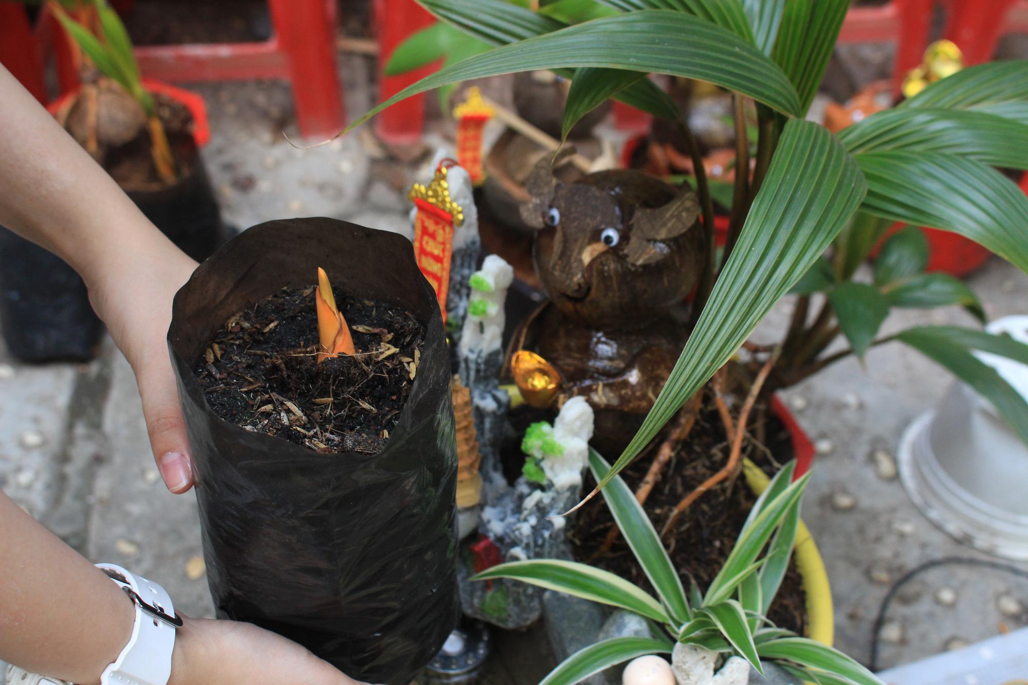 Độc đáo dừa khô bonsai hình trâu chơi Tết tiền triệu ở Sài Gòn - Ảnh 6.