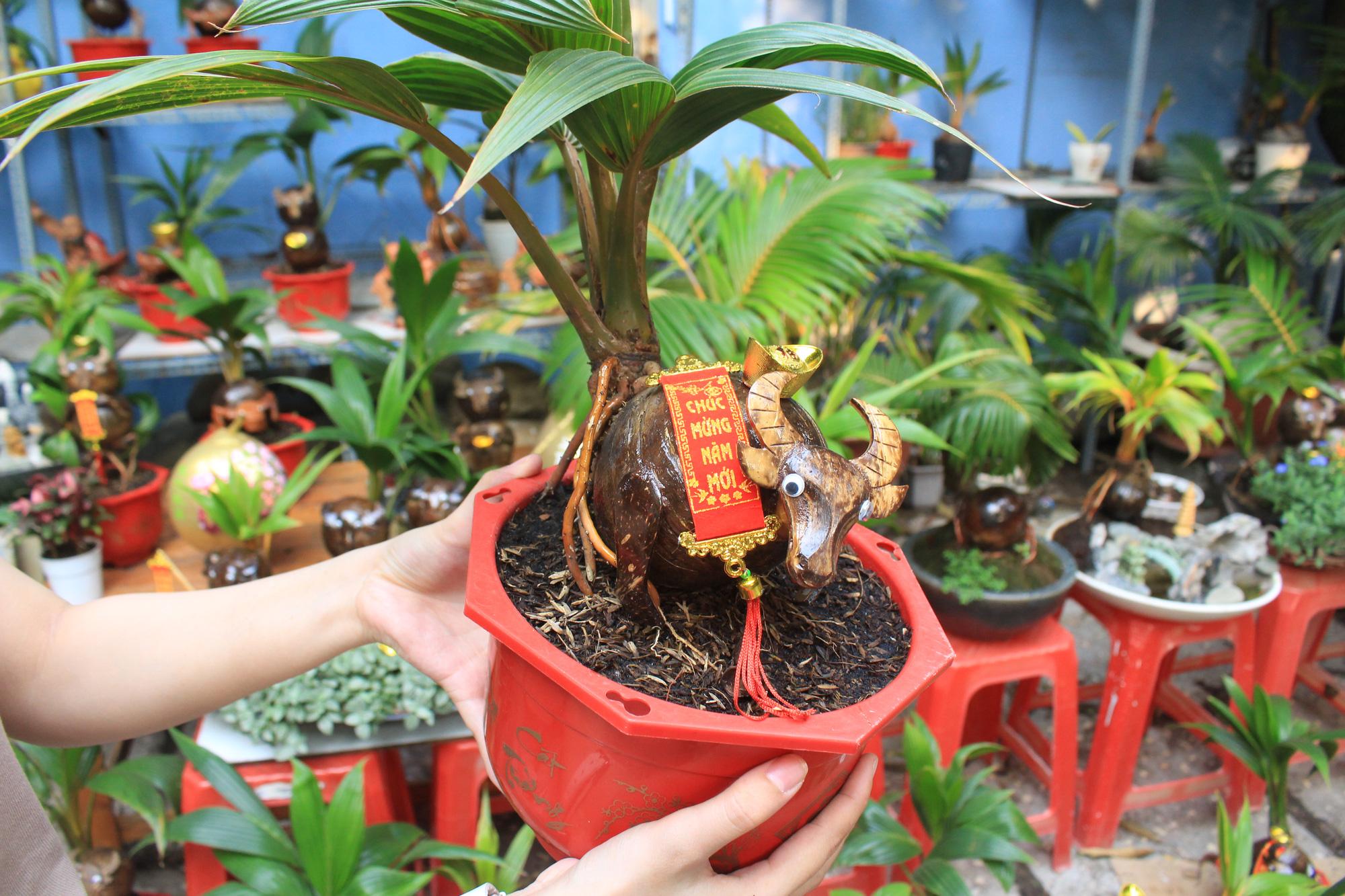 Độc đáo dừa khô bonsai hình trâu chơi Tết tiền triệu ở Sài Gòn - Ảnh 9.