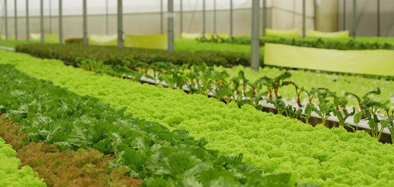 """Giá đất nông nghiệp Đà Lạt """"sốt"""" lên 70 triệu đồng/m2? - Ảnh 3."""