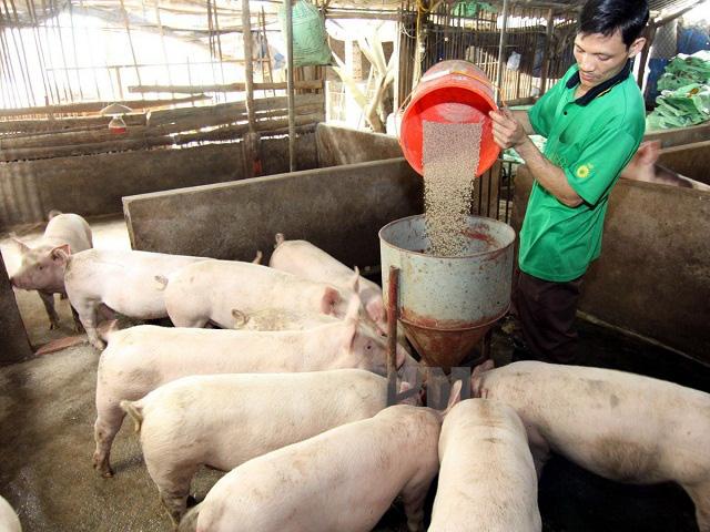 Giá nông sản hôm nay (17/1): Lợn hơi kết thúc một tuần giá liên tục tăng, tiêu vẫn chưa có dấu hiệu khởi sắc - Ảnh 1.
