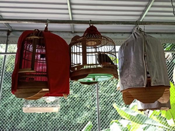 """Hé lộ tuyệt chiêu nuôi chim, chơi chim cảnh của 1 """"cao thủ"""" tỉnh Cao Bằng - Ảnh 3."""