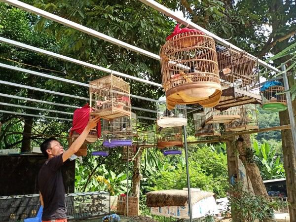 """Hé lộ tuyệt chiêu nuôi chim, chơi chim cảnh của 1 """"cao thủ"""" tỉnh Cao Bằng - Ảnh 1."""