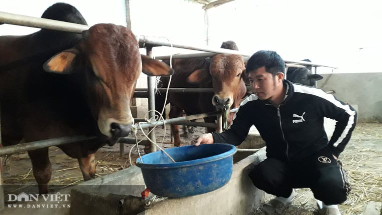 Thái Nguyên: Nuôi con ăn đủ các loại rau cỏ thanh niên trẻ lãi mỗi tháng 1 triệu đồng/con - Ảnh 4.