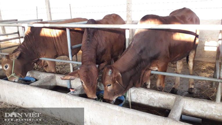 Thái Nguyên: Nuôi con ăn đủ các loại rau cỏ thanh niên trẻ lãi mỗi tháng 1 triệu đồng/con - Ảnh 2.