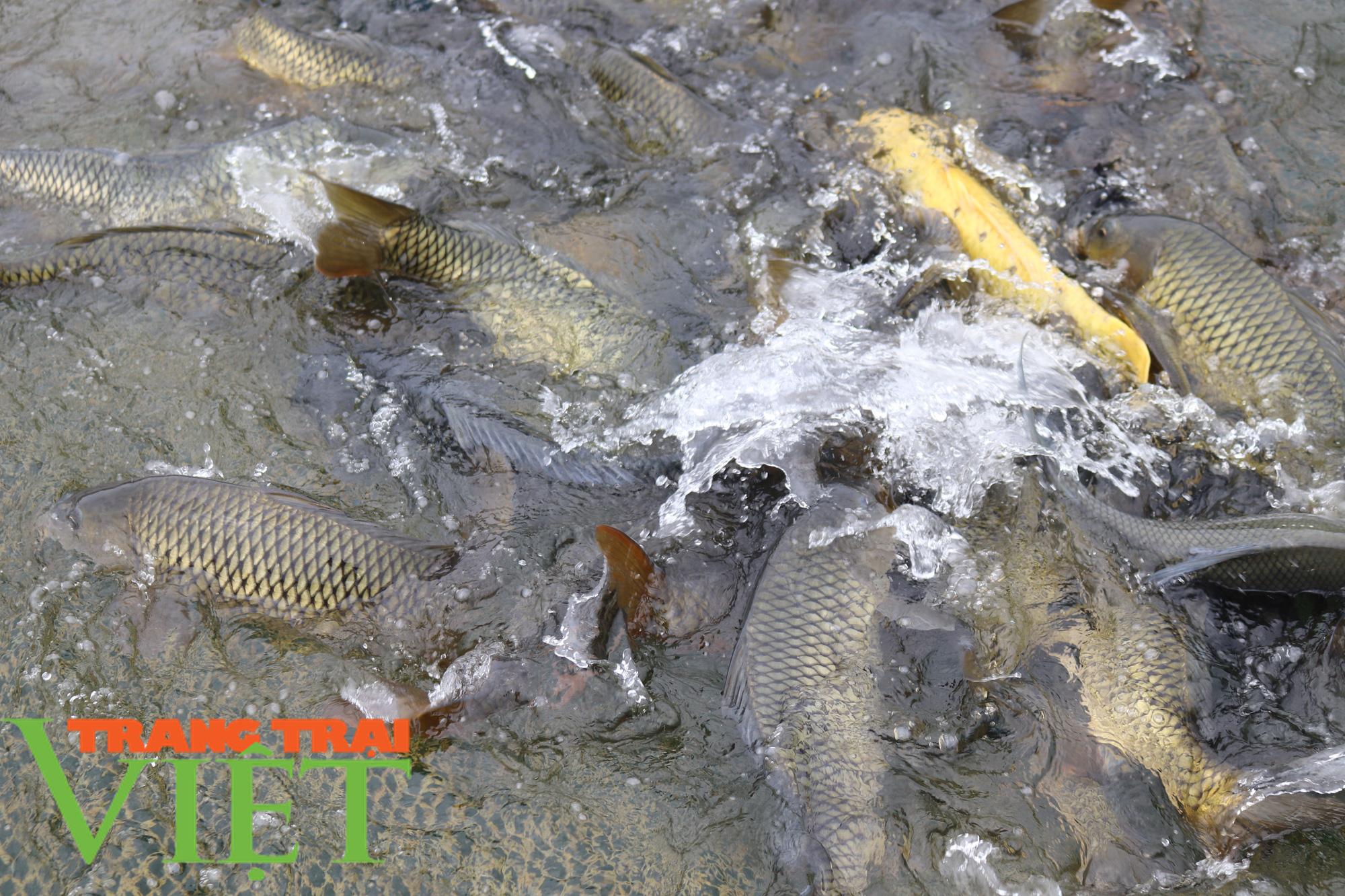 Bỏ túi trên 160 triệu đồng từ nuôi cá lồng trên lòng hồ sông Đà  - Ảnh 4.
