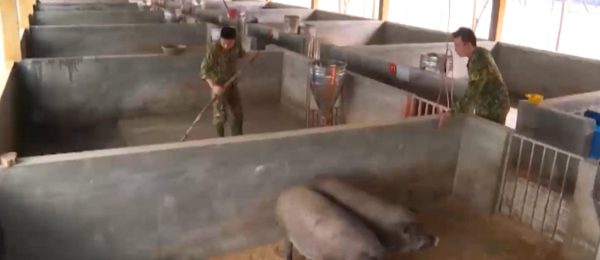 Thừa Thiên - Huế: Khôi phục sản xuất tại các doanh trại quân đội sau thiên tai - Ảnh 4.