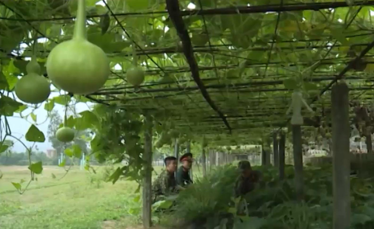 Thừa Thiên - Huế: Khôi phục sản xuất tại các doanh trại quân đội sau thiên tai - Ảnh 3.
