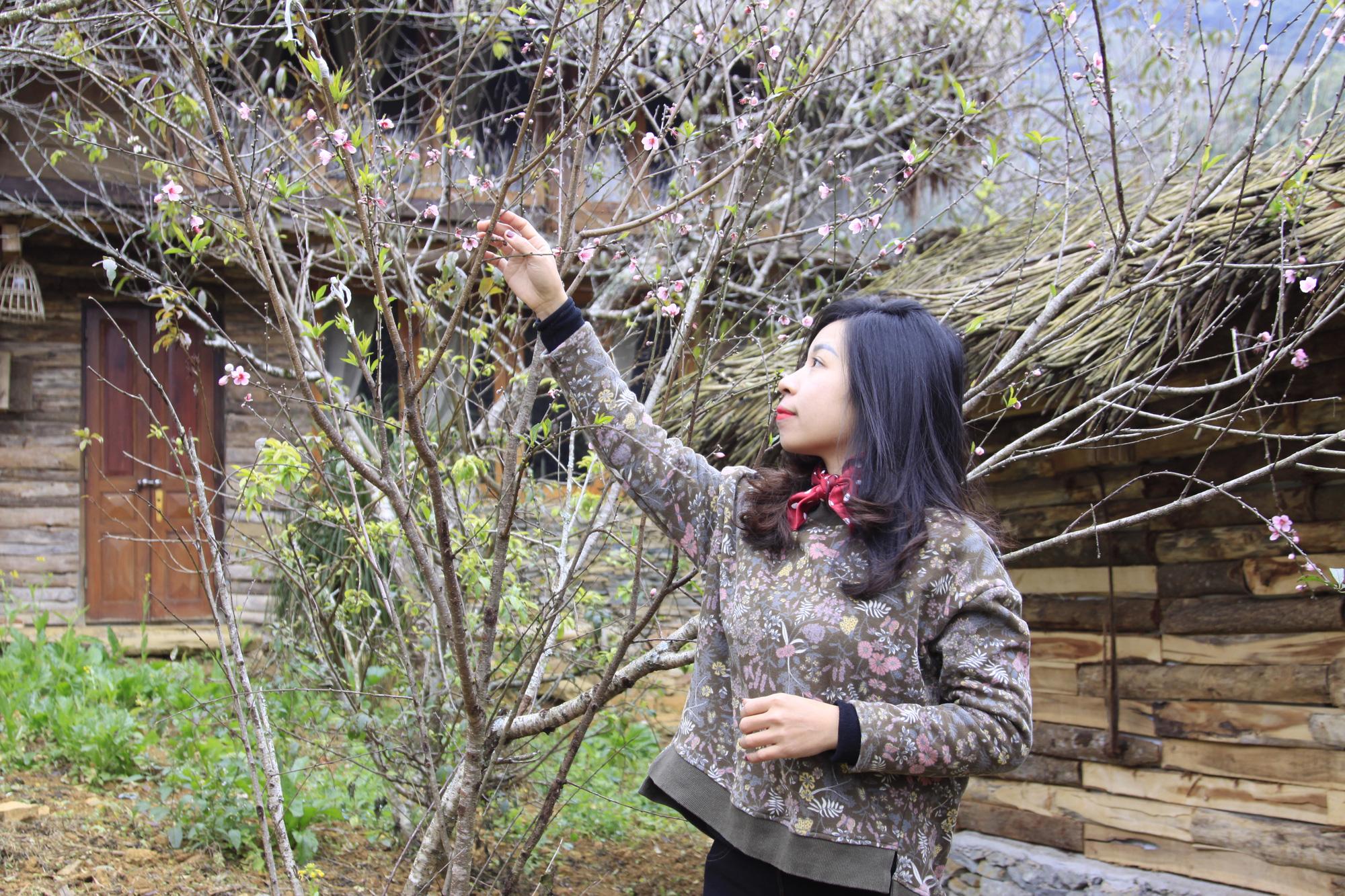 Sơn La: Sợ dân khó tiêu thụ đào rừng nhà trồng, Vân Hồ tung 11.000 tem truy xuất đào, phát miễn phí - Ảnh 2.