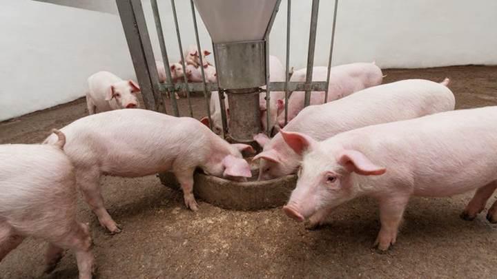 Giá nông sản hôm nay (18/1): Lợn hơi tại nhiều tỉnh thành nhích nhẹ, cà phê tiếp đà tăng - Ảnh 1.
