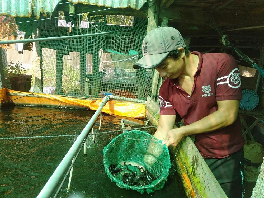 An Giang: Nuôi loài cá tên là chạch nhưng không rúc bùn, chăm dễ như ăn kẹo mà bán nhanh được giá cao - Ảnh 1.
