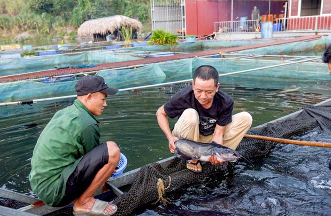 Tuyên Quang: Ở thị trấn này, đặc sản là thịt lợn chua, dâu tây, lại còn có cả loài cá râu dài - Ảnh 1.