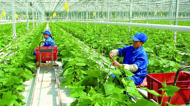 Các doanh nghiệp Đài Loan đề xuất triển khai tại Thanh Hóa một dự án nông nghiệp có quy mô khoảng 2.500 ha  - Ảnh 2.