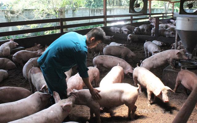 """Giá nông sản hôm nay (19/1): Cà phê chờ cơ hội """"lội ngược dòng"""", lợn hơi tiếp tục """"nhảy múa"""" - Ảnh 2."""