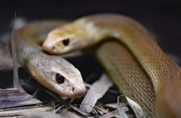 Hoảng hồn, người đàn ông dành 72 giờ chung sống với 72 con rắn kịch độc - Ảnh 1.