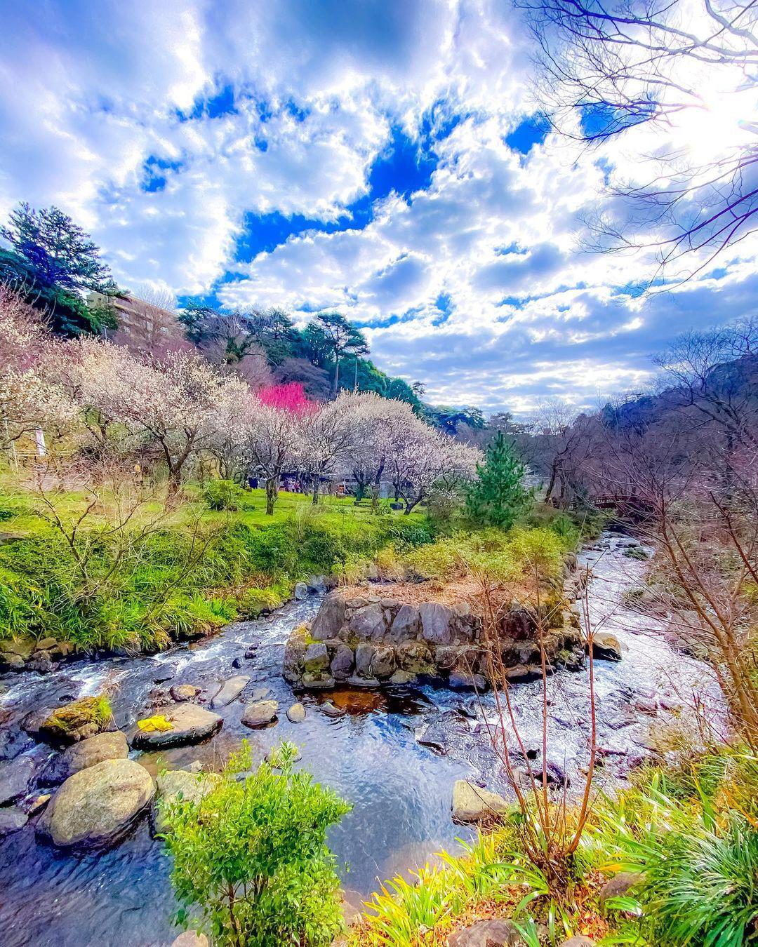 Nơi đầu tiên hoa mơ nở ở Nhật Bản - Ảnh 4.