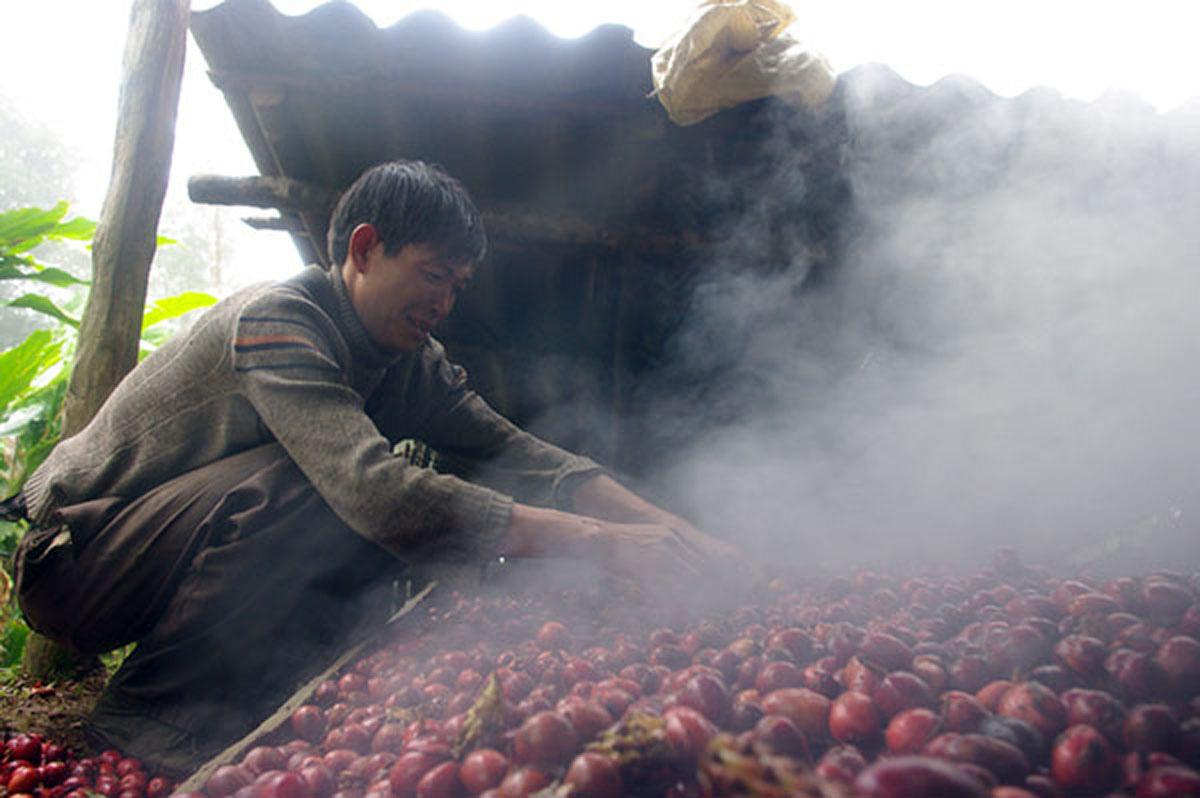 Lào Cai: Nông dân vô rừng rậm trồng loài cây gì mà bán 1 mùa quả cả trăm tỷ đồng, nhưng vẫn nhiều mối lo? - Ảnh 2.
