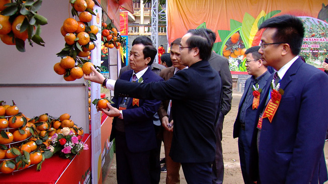 Hà Giang: Truy xuất được nguồn gốc, cam sành đắt hàng - Ảnh 1.