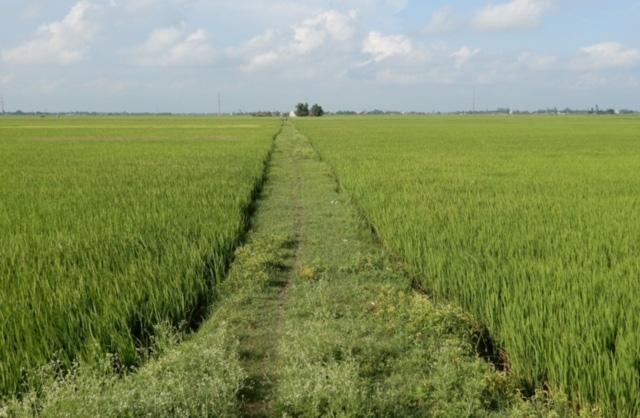 Điều kiện quan trọng để chuyển đổi đất trồng lúa sang đất ở năm 2021 - Ảnh 1.
