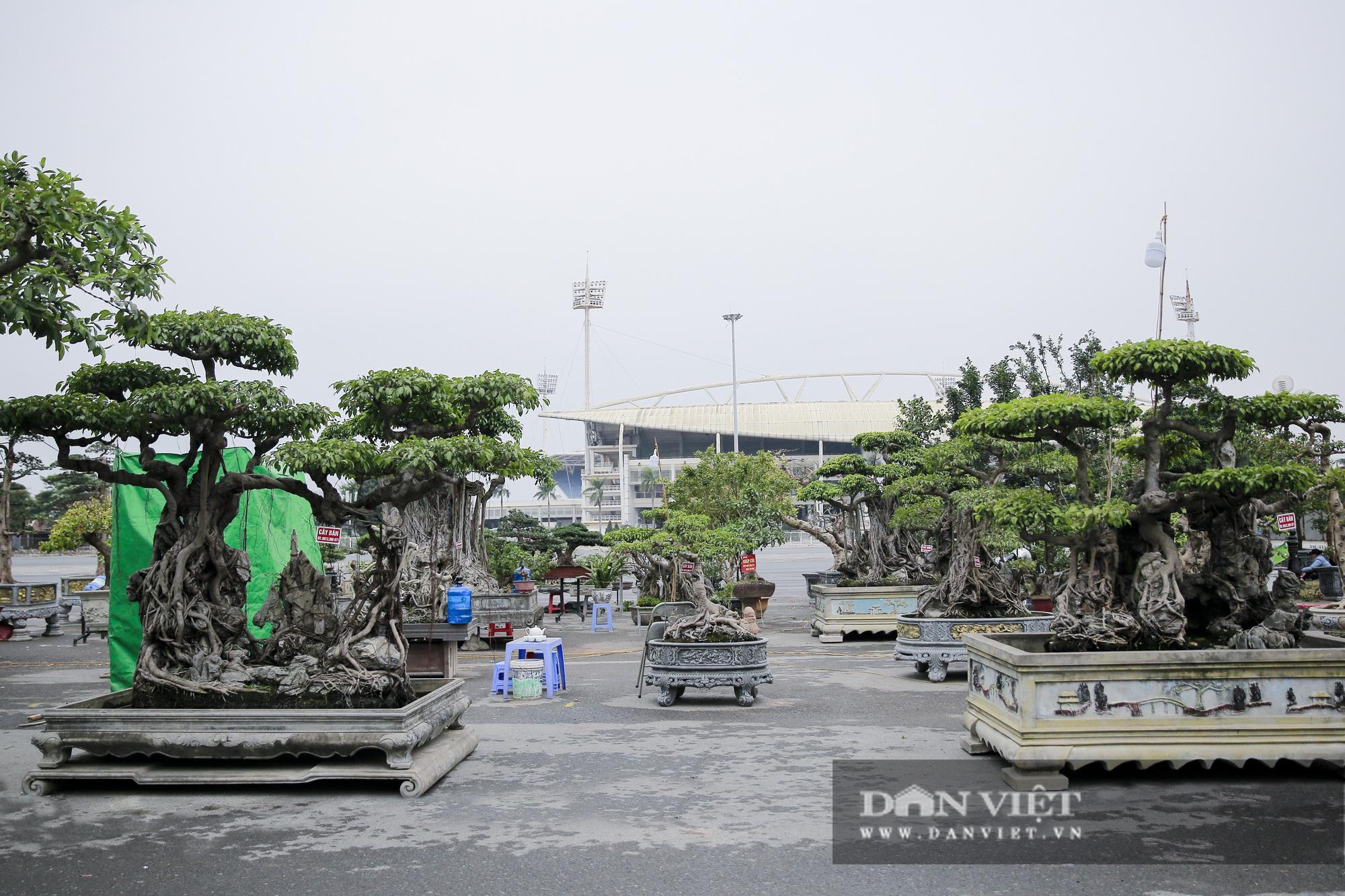 Mãn nhãn với những chậu bonsai quý hiếm tại Festival Sinh vật cảnh Hà Nội - Ảnh 1.