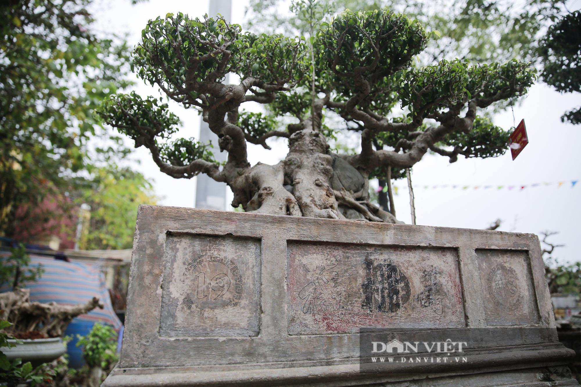Mãn nhãn với những chậu bonsai quý hiếm tại Festival Sinh vật cảnh Hà Nội - Ảnh 10.