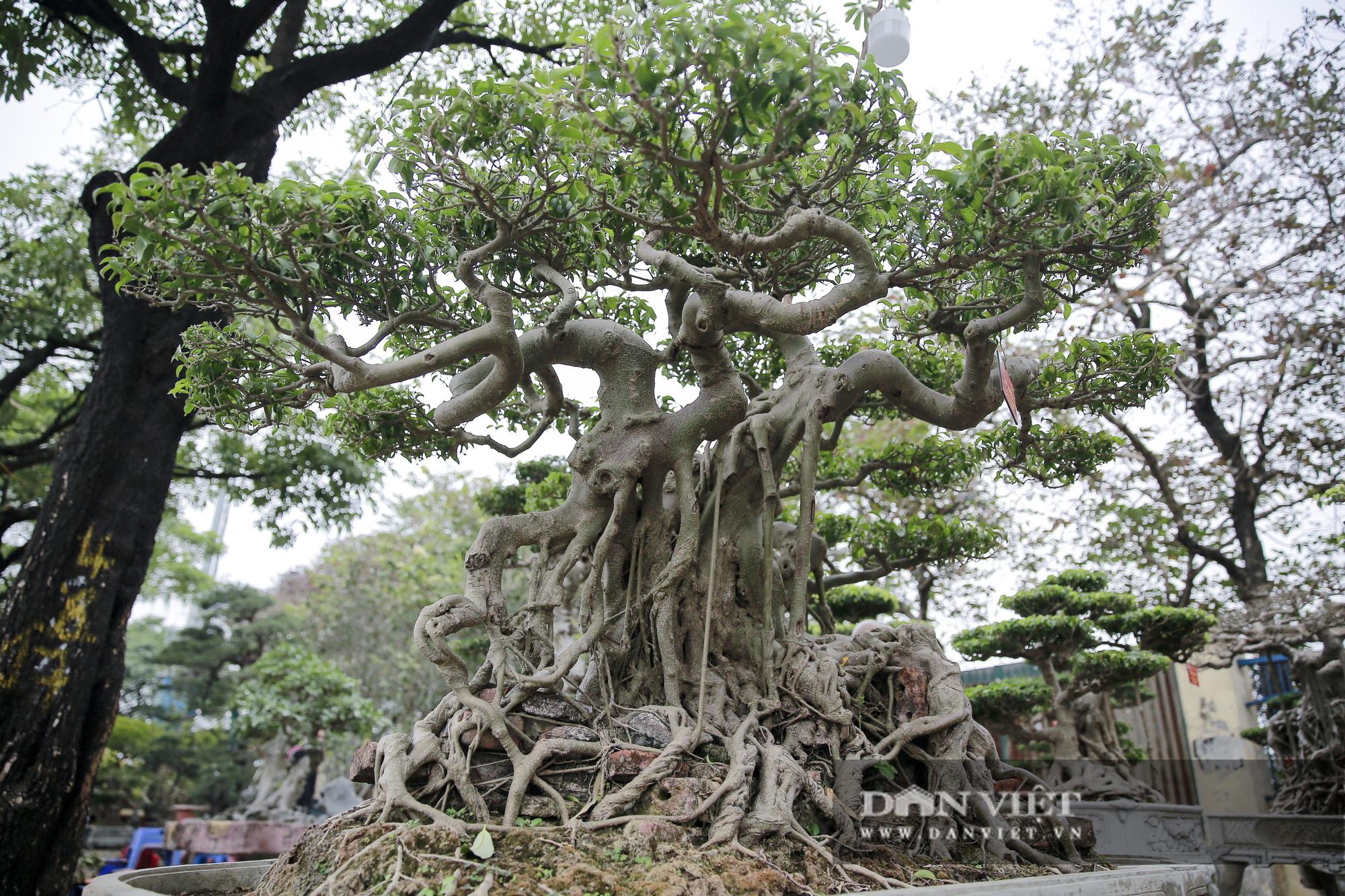 Mãn nhãn với những chậu bonsai quý hiếm tại Festival Sinh vật cảnh Hà Nội - Ảnh 11.