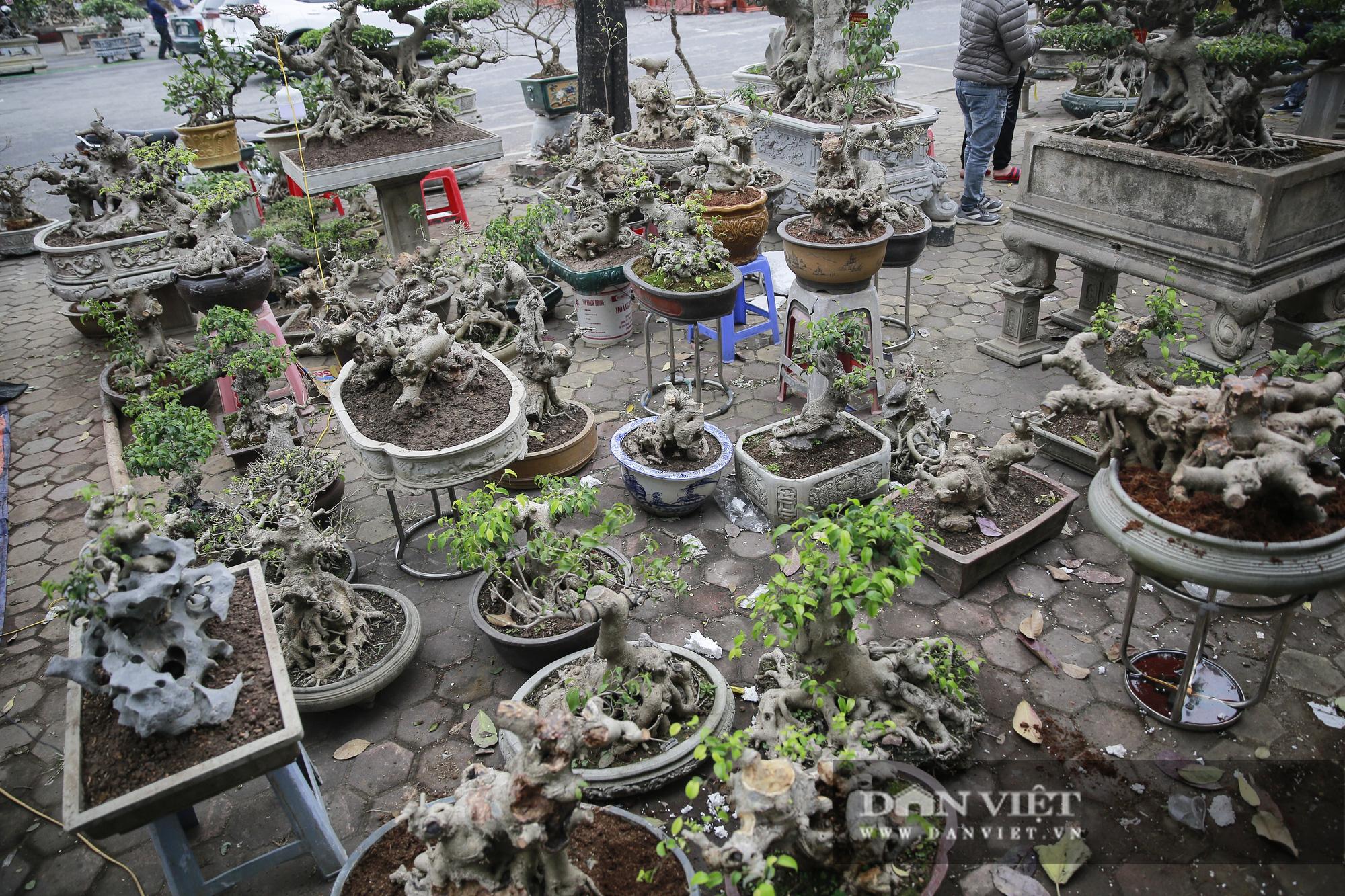 Mãn nhãn với những chậu bonsai quý hiếm tại Festival Sinh vật cảnh Hà Nội - Ảnh 12.